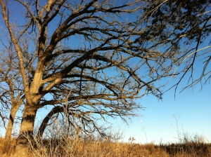 Trees at Glacial Park, IL.