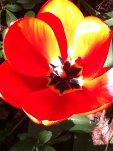 Red Flower 07.15.13