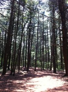 Lexington Woods 06.22.12