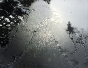 Iced window 01.22.14