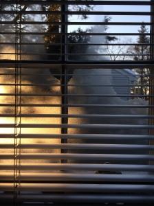 Winter light 02.11.14