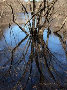 Reflection 04.24.14