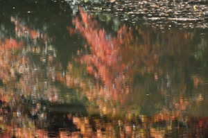 Reflections on pond 10.12.14