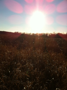 Sun on the prairie 11.24.12