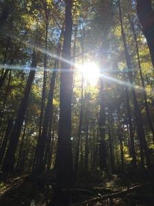 Carlisle Woods 10.11.15