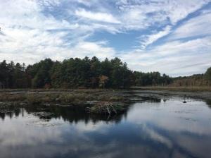 Carlisle beaver pond 10.11.17